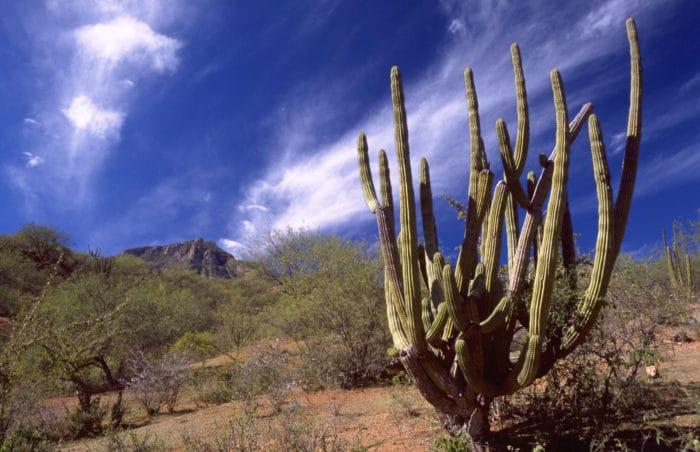 sierra-madre-cactus-1600